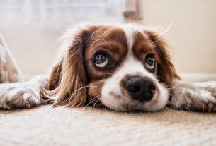 Podstawowe rodzaje karmy dla psów