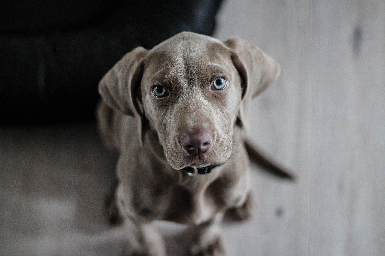 Jak wybrać odpowiednią karmę dla psa